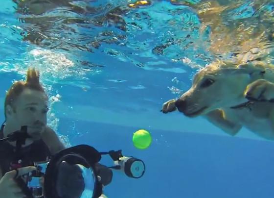 Filhotes de cachorros são filmados debaixo d'àgua