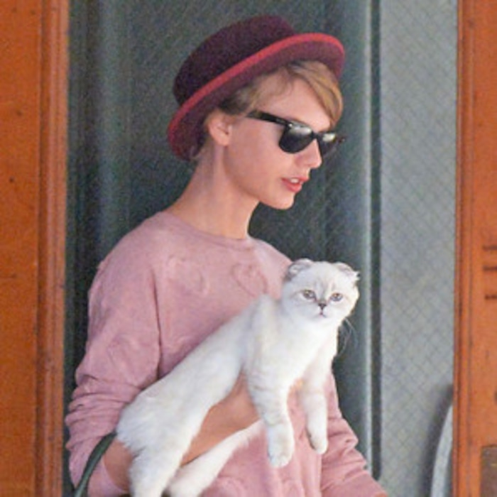 Taylor Swift Explains Why She Carries Cat Olivia Benson Around New