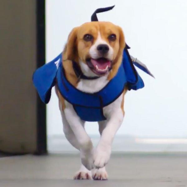 Sherlock, KLM Dog