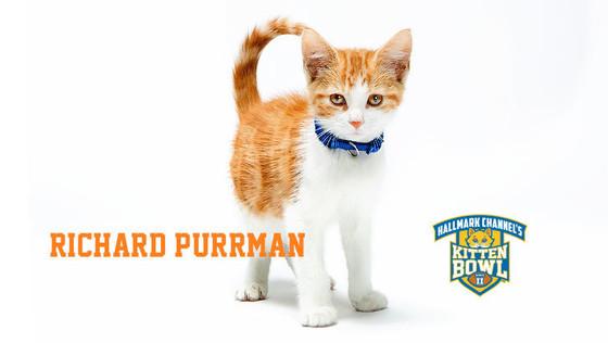 Kitten Bowl 2015