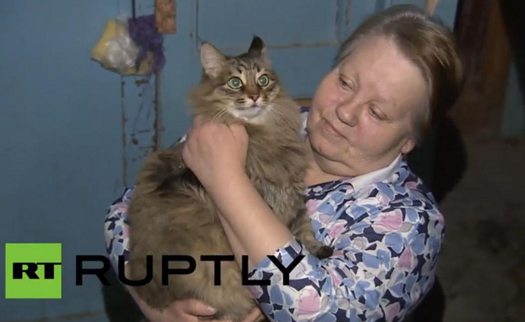 Masha, Russian Cat