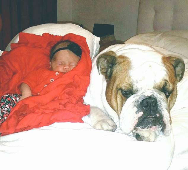 Baby Chanel, Ice-T & Coco's Daughter, Dogs