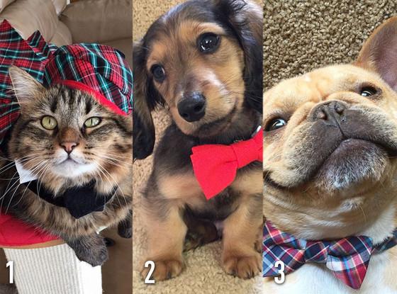 #ERedCarpetAwards Tournament, Pet Fashion