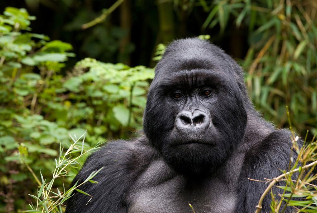 World Best Girl Getaways, Galentines Day, Gorilla Trek