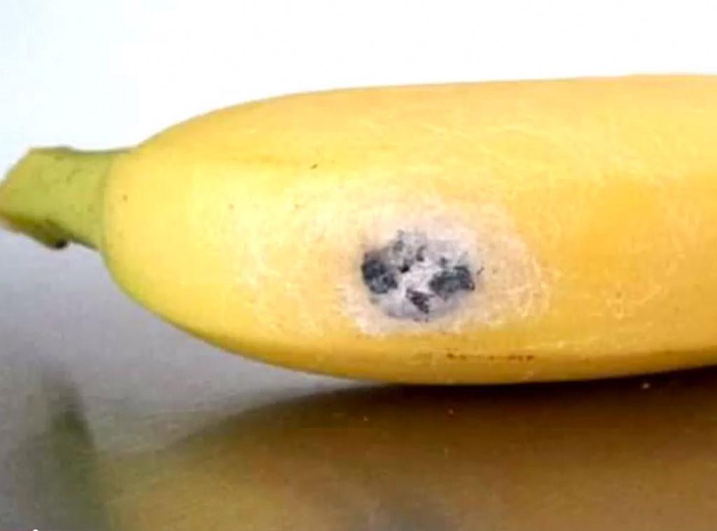 Mulher encontra em banana ovos de aranha que causam ereção de 4 horas