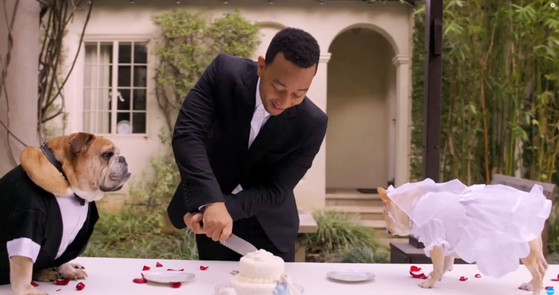 John Legend, Dog Wedding