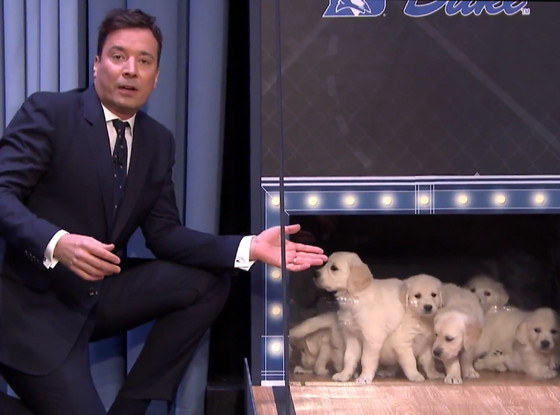 The Tonight Show with Jimmy Fallon, Puppies, Final Four