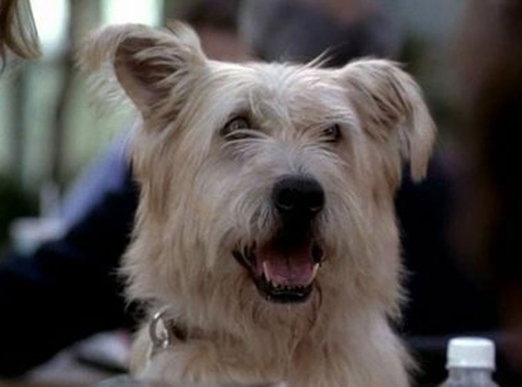 Doc the dog from We Ranked All the Grey\'s Anatomy Deaths By How Hard ...