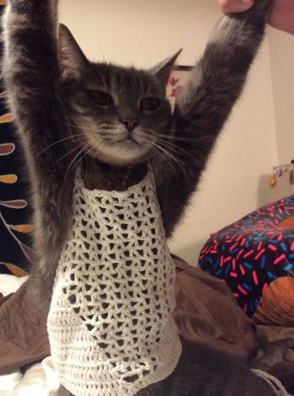 Amazon Review, Cat Crop Top