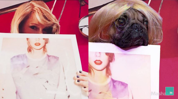 Doug the Pug Recreates Taylor Swift Instagram Photos