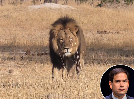 Cecil The Lion, Marco Rubio