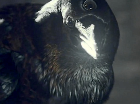 Three Eyed Raven, Game of Thrones