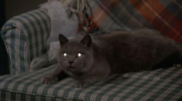 """Résultat de recherche d'images pour """"Gato guason"""""""