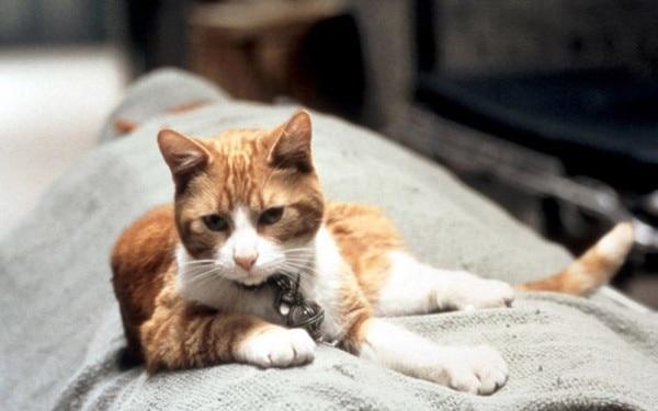 Los 25 gatos más fascinantes del cine (+ Fotos) | E! News