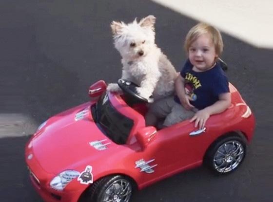 Dog Drives Little Boy