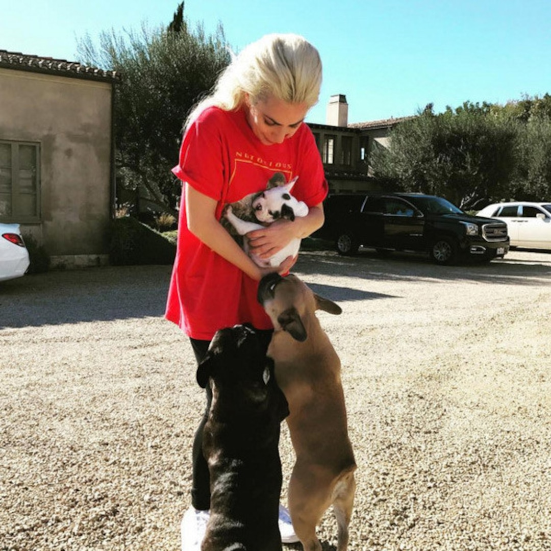 Lady Gaga Welcomes a New Member to Her Adorable Puppy Fam - E! Online