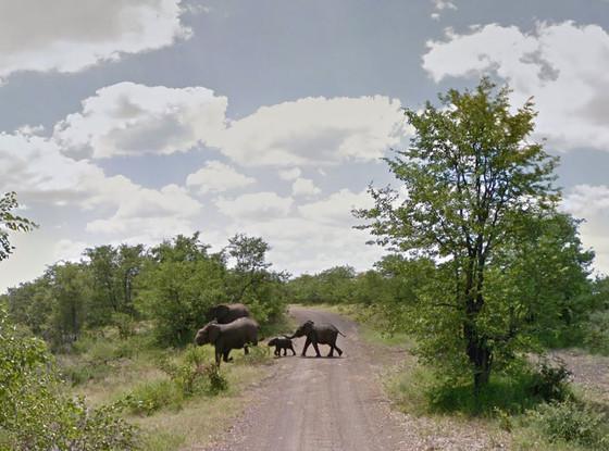 Google Street View, African Safari