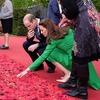 Prince Harry, Prince William, Kate Middleton, Duchess Catherine