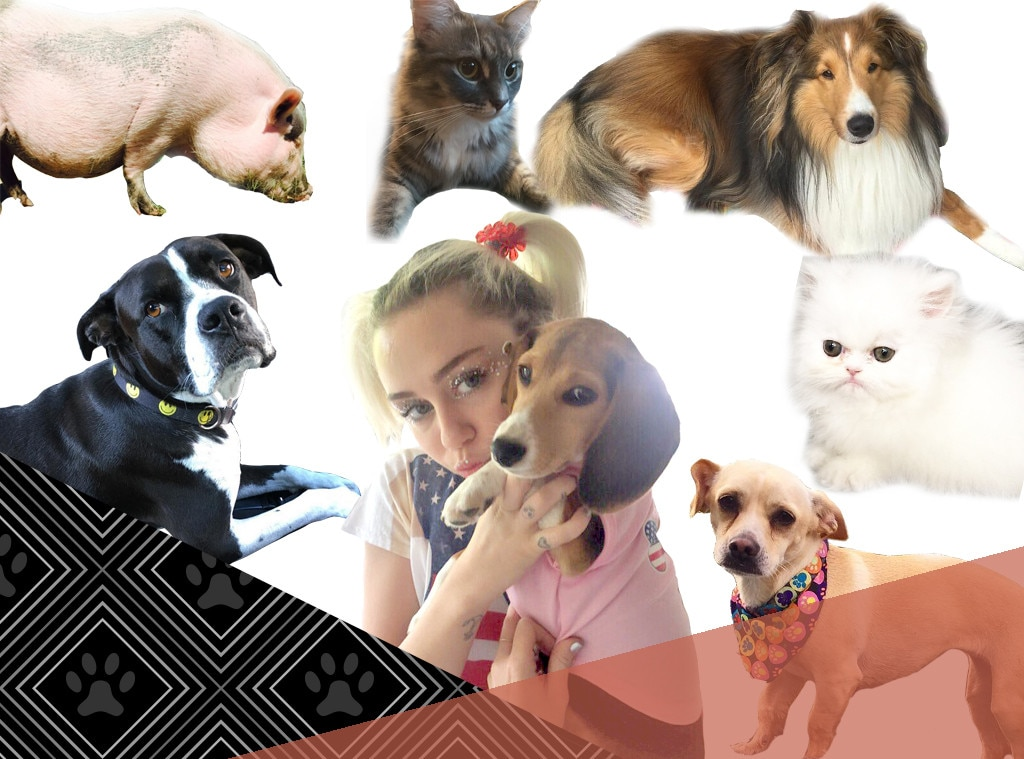 Pet Week, Celebrities with Lots of Animals, Miley Cyrus