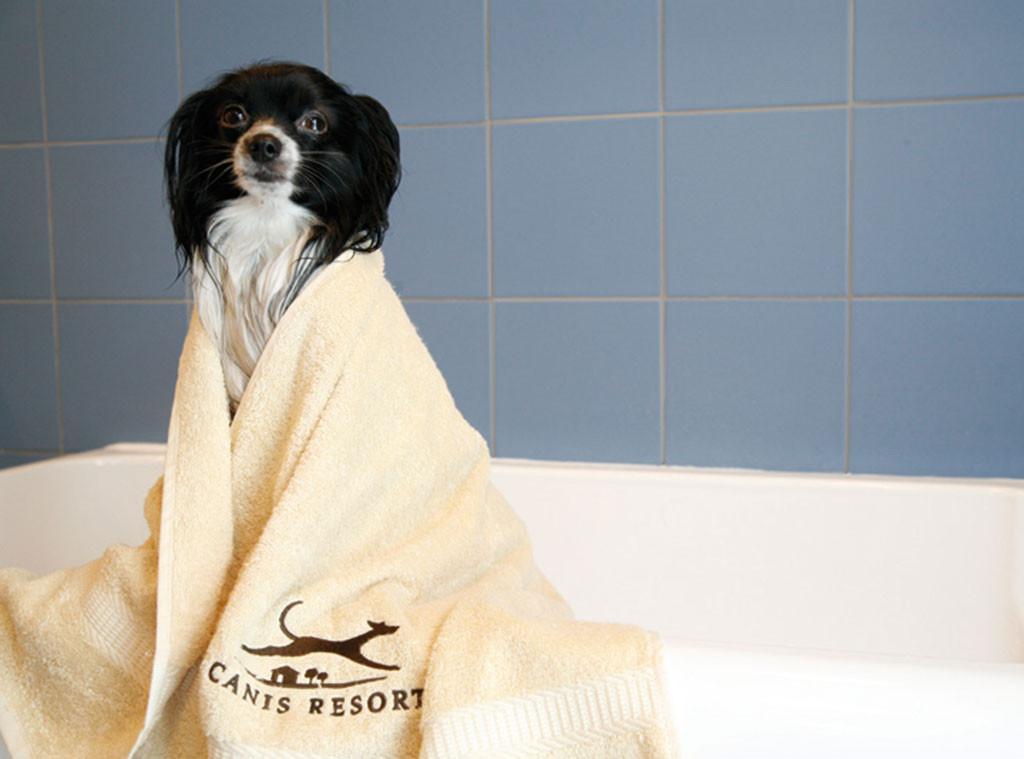 Canis Resort, Spa, Pet week