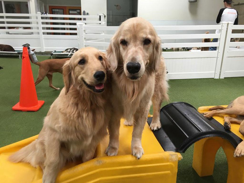 Dogworks, Pet week