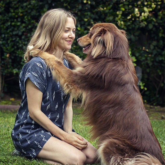 "Amanda Seyfried -  Actress wrote  , ""Six days until LA's #strutyourmutt event at the LA Coliseum Exposition Park. Walk with @finnsite and me to raise awareness for the 9,000 dogs and cats killed every day in shelters across the US. See you there!"" NEXT GALLERY: These celeb pets have their own social media accounts!"