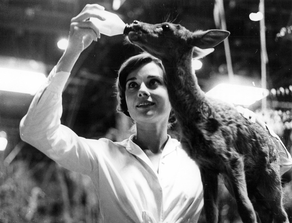 Audrey Hepburn -  The silver screen legend first met her pet fawn Pippin while filming  Green Mansions.  After the animal trainer encouraged her to bring the deer home to bond, the two became inseparable friends and even slept together.