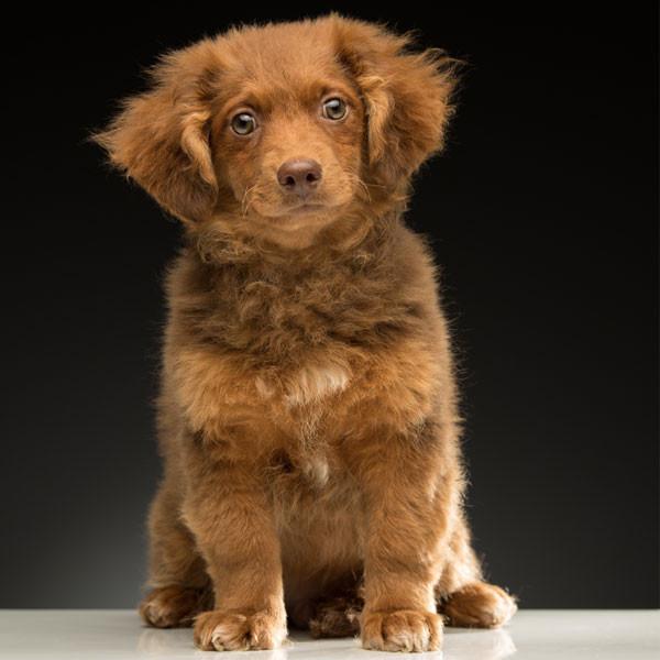 2017 Oscars Puppies, LA Animal Rescue, Chili