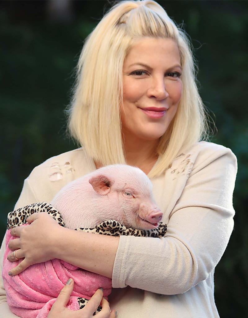 Tori Spelling, Nutmeg, Pig