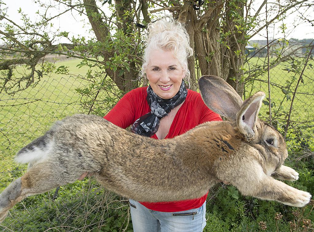 Annette Edwards, Giant Rabbit, Bunny