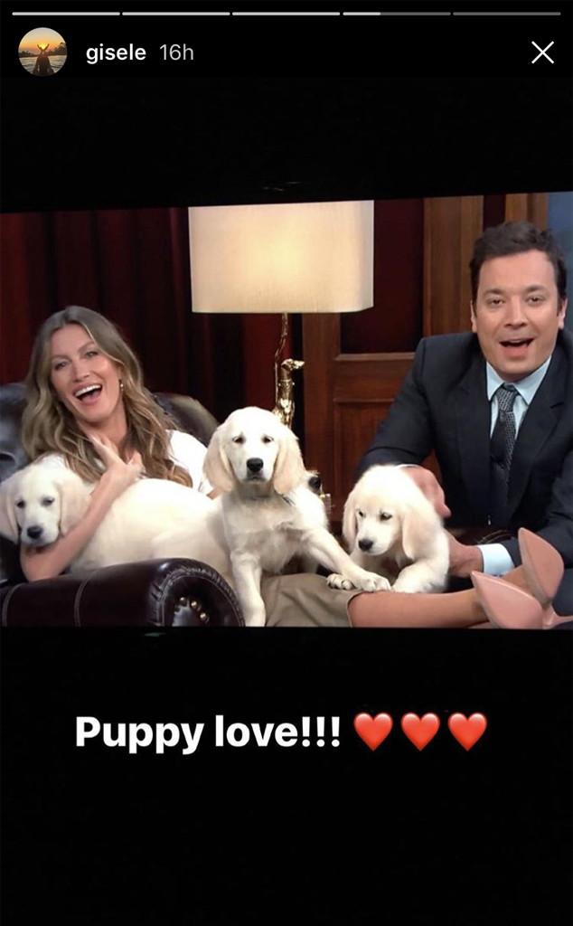 Gisele Bündchen, Jimmy Fallon, Puppies