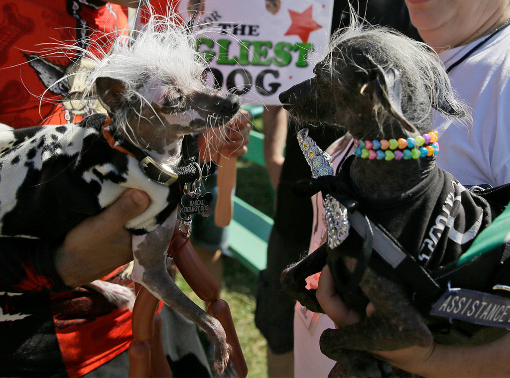 Rascal, Chase, World's Ugliest Dog Contest
