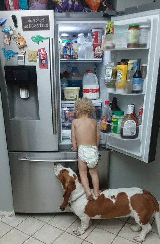 Cachorro ajuda bebê a pegar comida na geladeira