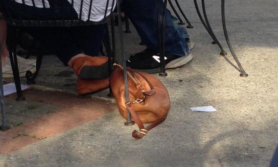 Cachorro que parece bolsa