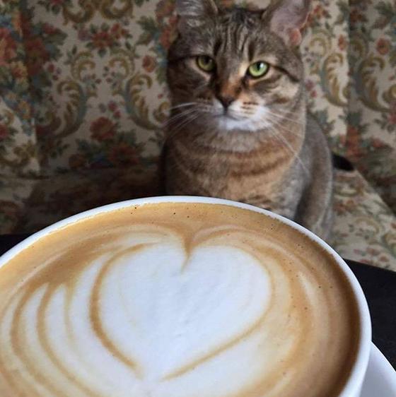 Café na Polônia com gatos