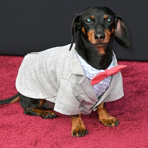 Crusoe the Celebrity Dachshund, 2018 Peoples Choice Awards, PCAs