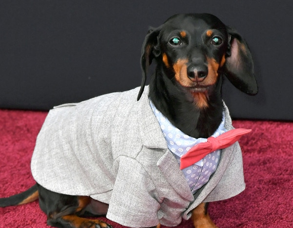 Crusoe the celebrity dachshund cops and robbers compilations