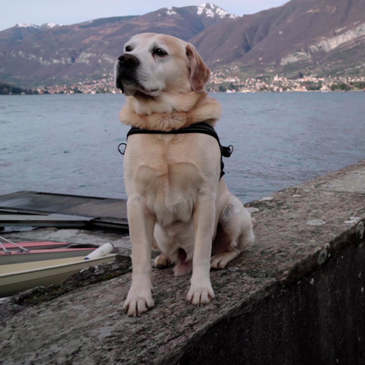 The Story Behind Netflixs Dogs Documentary Series E News
