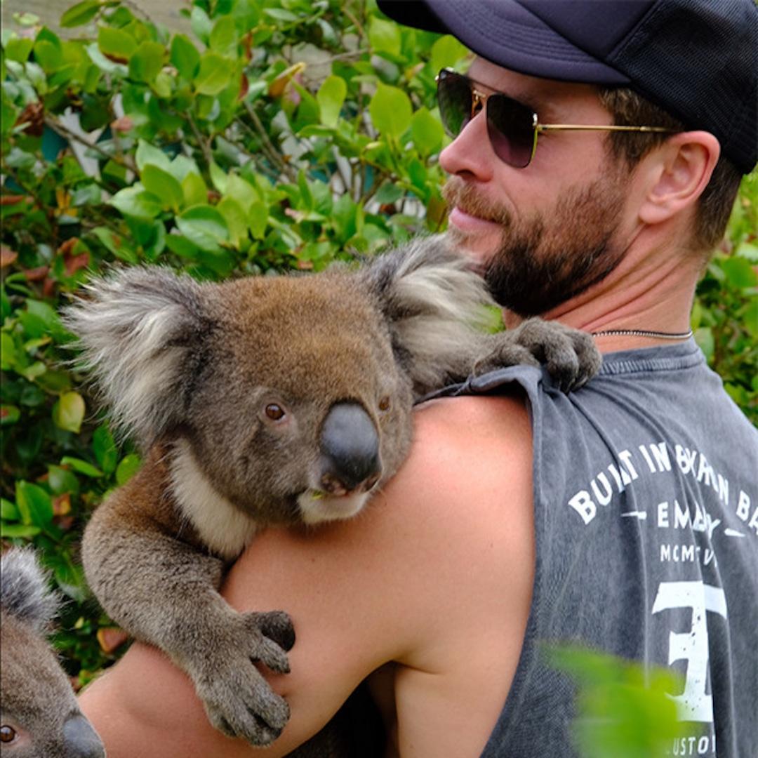 Chris Hemsworth Hugging a Koala Is All We Need on a Monday ... - photo#10