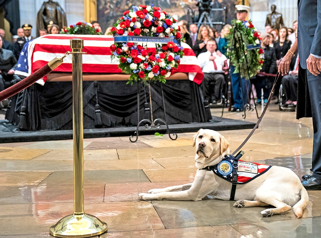 George H.W. Bush's Dog Sully Begins New Role at Military Hospital