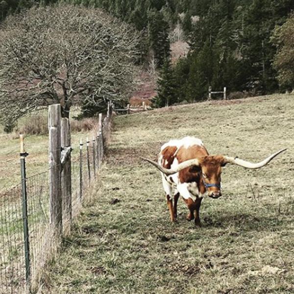 Chris Pratt, farm
