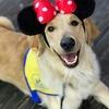 Canine Companions, Disneyland