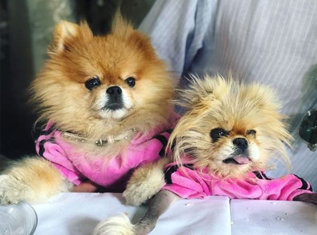 Lisa Vanderpump -  The  Real Housewives  star has never been shy to show her love for her fur babies, like in  this shot  of her pooches.