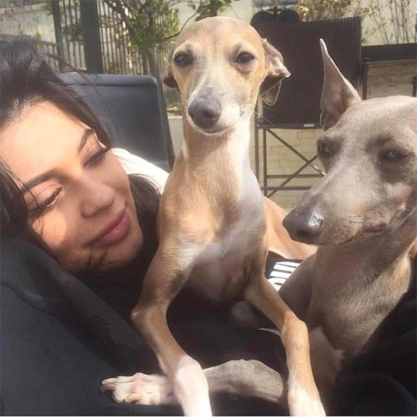 Kylie Jenner, Dogs