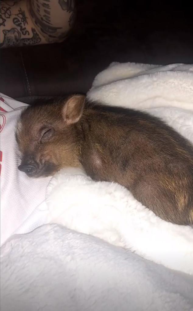 Pete Davidson, Ariana Grande, Pig