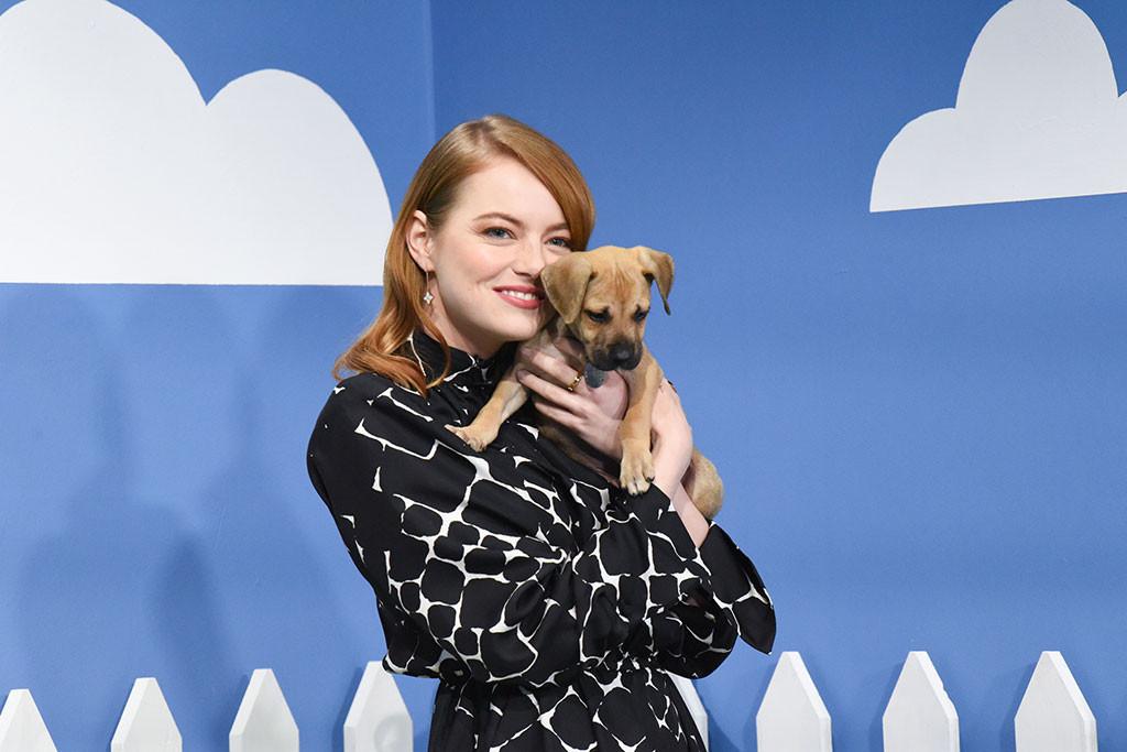 Emma Stone, dog, The Late Show