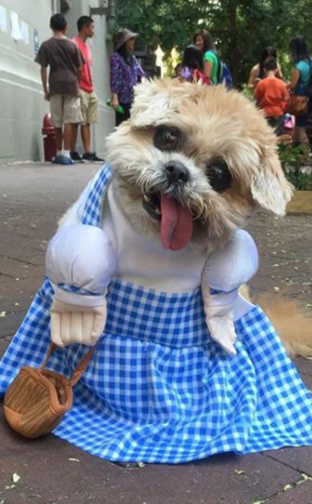 Marnie the Dog, Social Media Stars