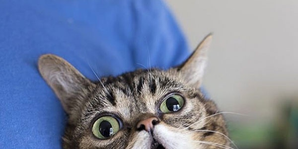 Lil Bub, the Internet's Cutest Viral Cat, Has Died At Age 8
