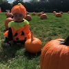 True Thompson, Halloween, Pumpkin Patch
