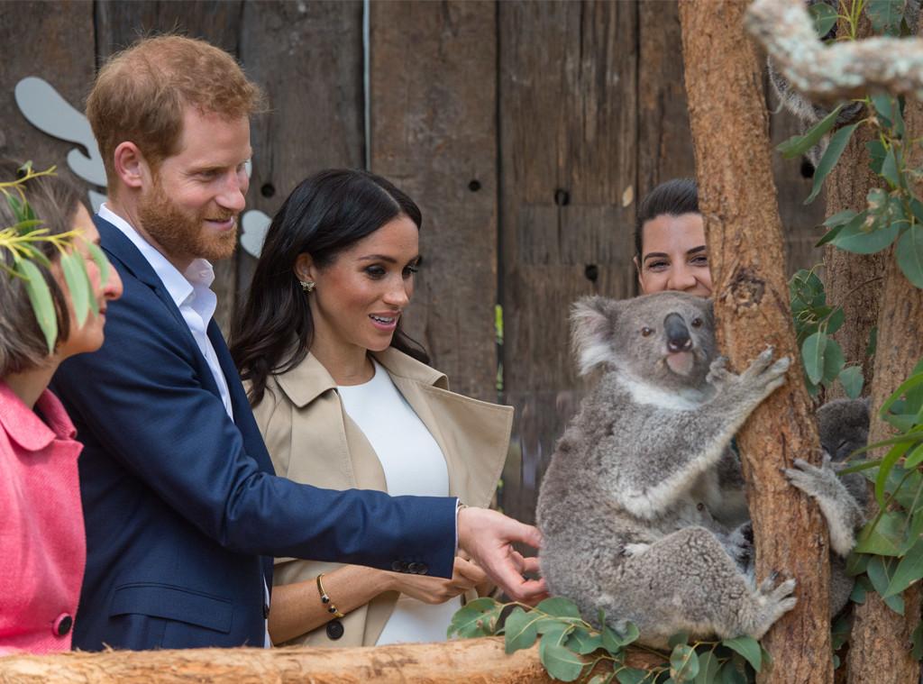 Prince Harry, Meghan Markle, Australia, Koala